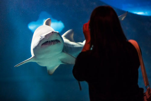 Shark-at-Greater-Cleveland-Aquarium-(c)-Dale-McDonald-for-ThisisCleveland.com